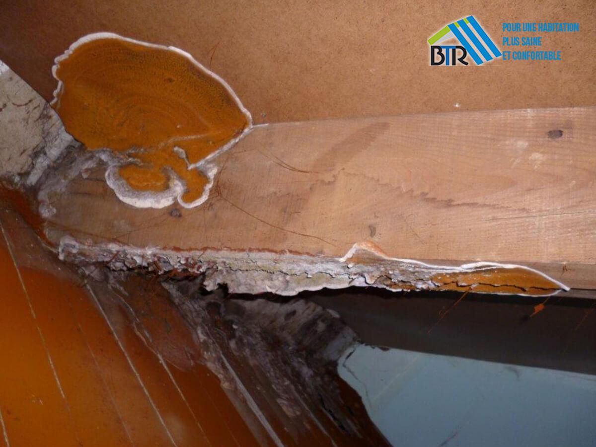 carpophore sur arbaletrier en sous-face de toiture