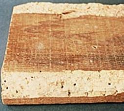 dégats du lyctus brunneus