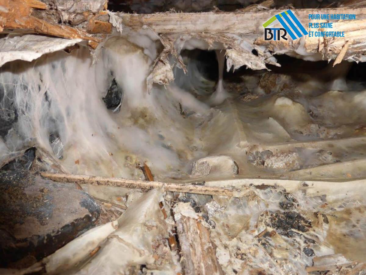 développement de champignon en sous-face de plancher sur lambourde
