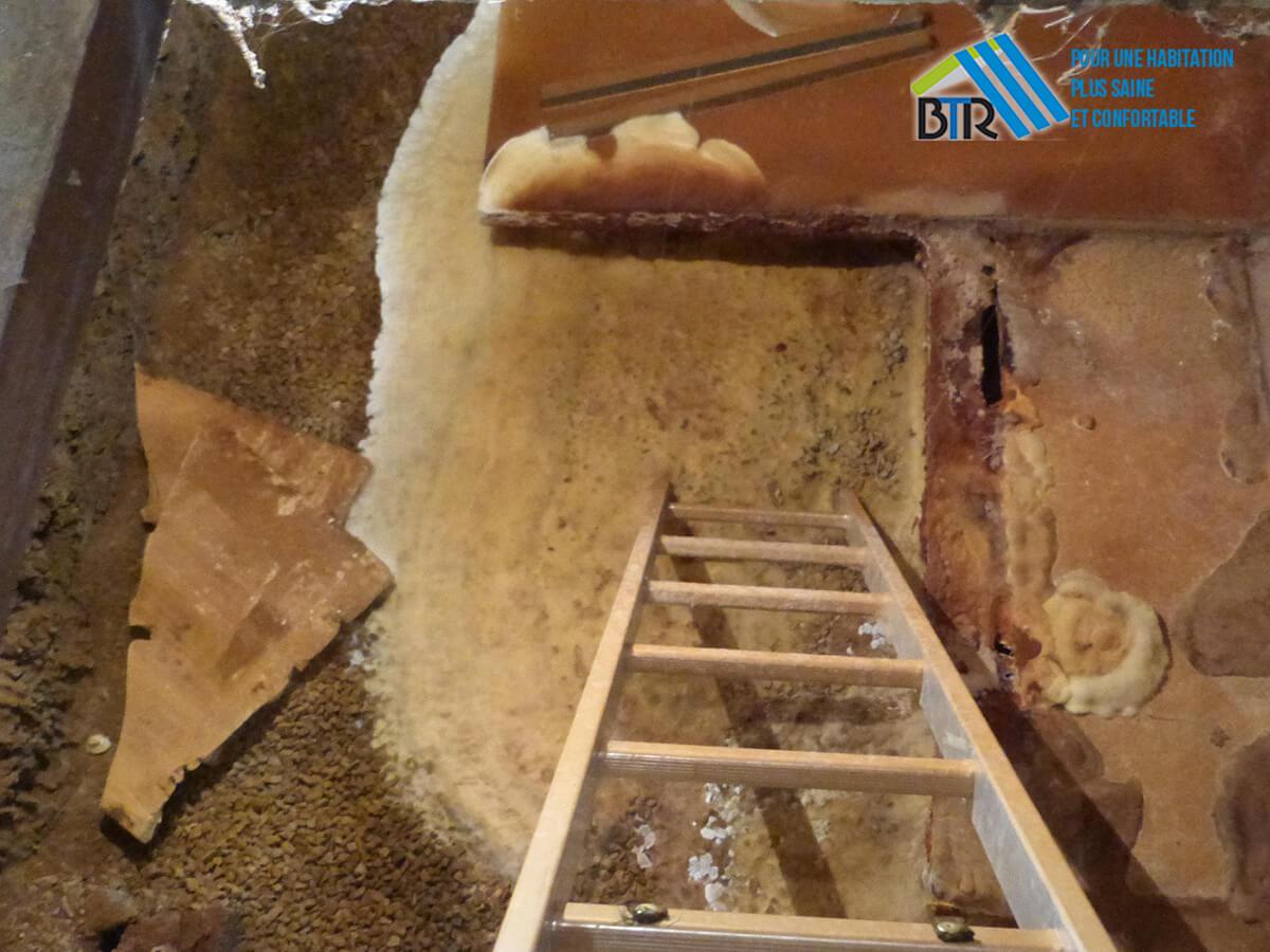 infestation de mérule dans une fosse de garage