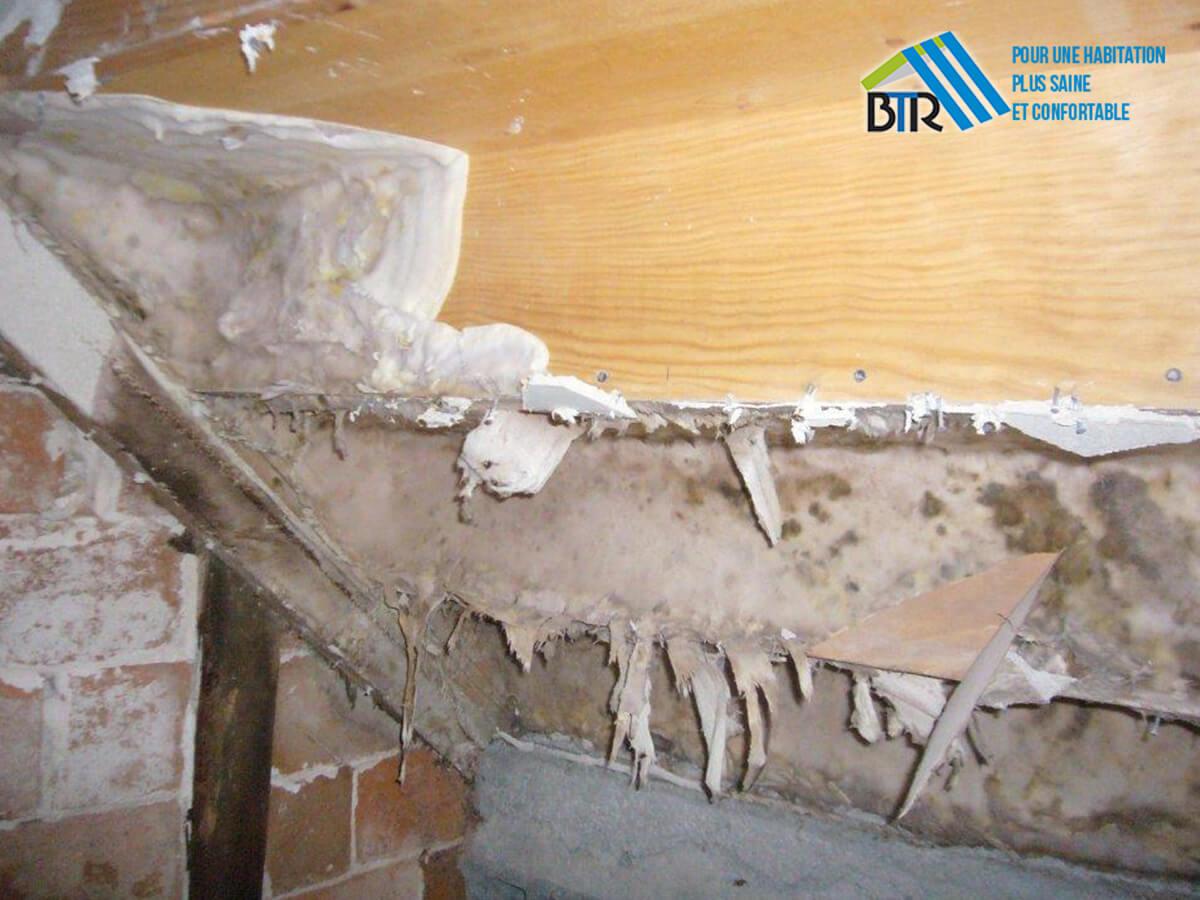 infestation de mérule en sous-face d'escalier (local confiné)