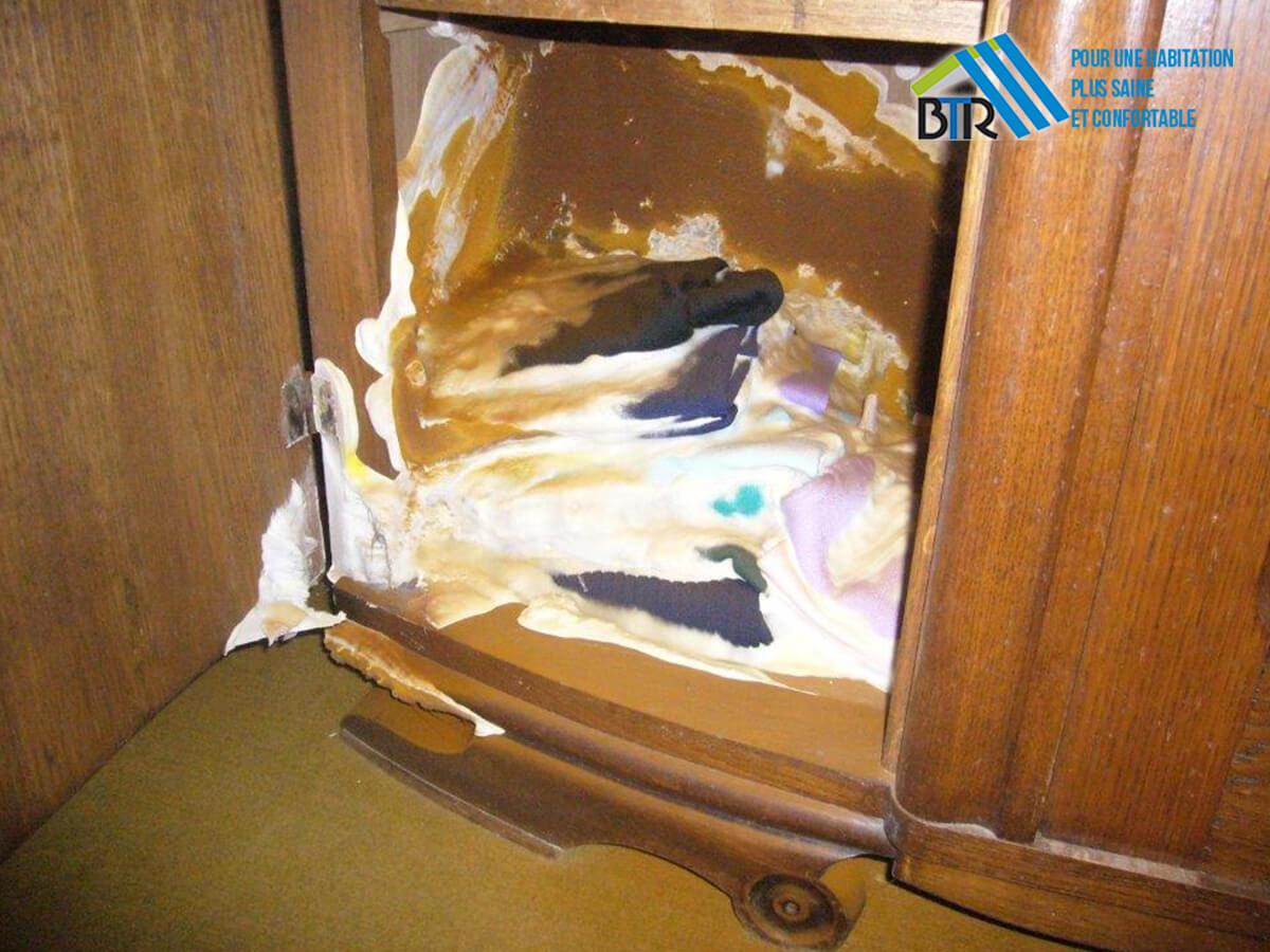 mérule installé dans une armoire au sein d'un logement
