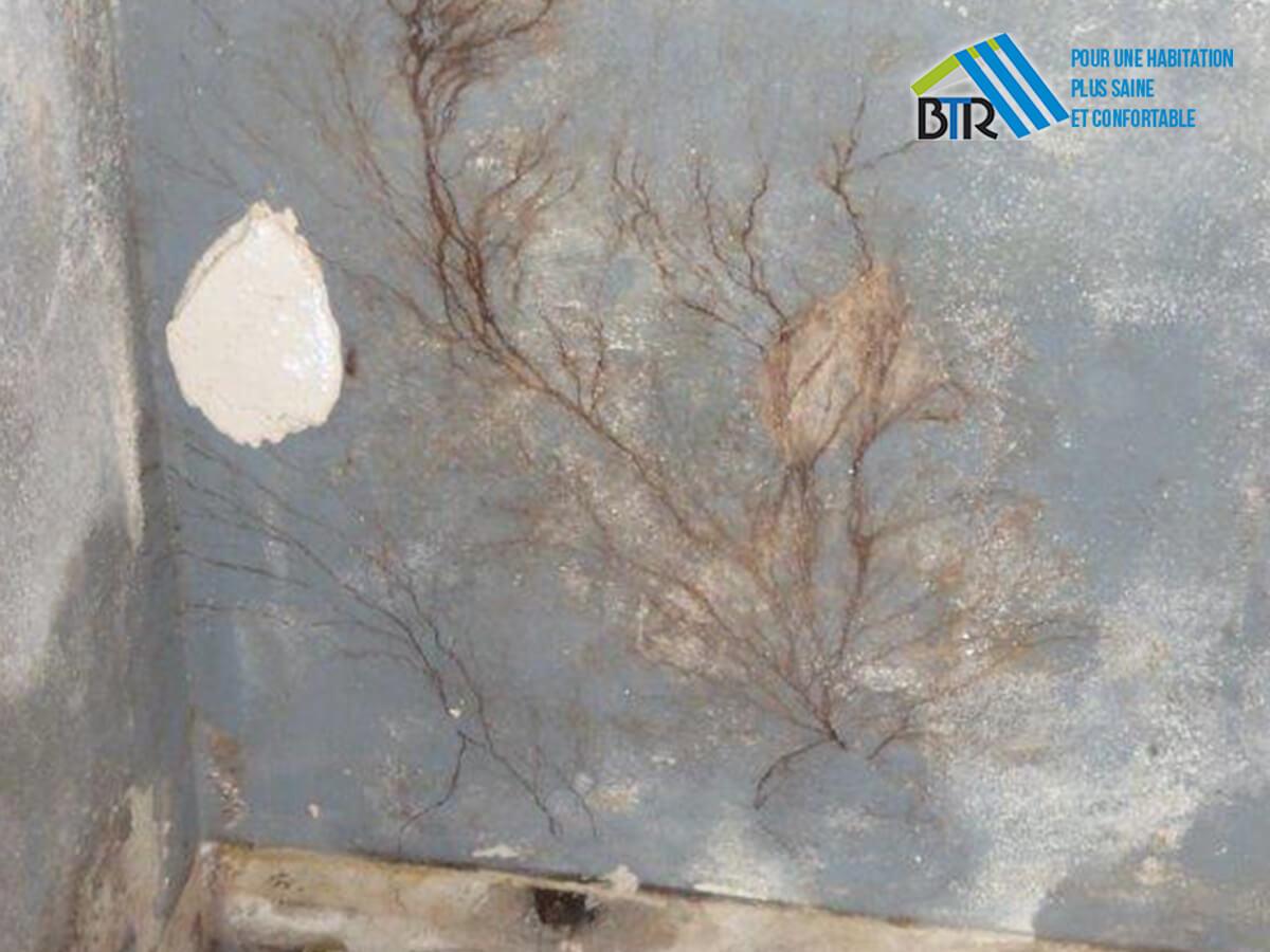 mérule découvert derrière une cloison en Placomur (plancher retiré)