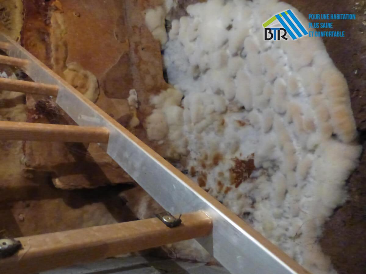 mycélium et spores de mérule dans une cave
