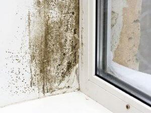 moisissures et champignons sur mur près de fenêtre