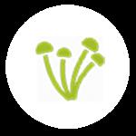 traitement-des-mérule-et-champignons-lignivores