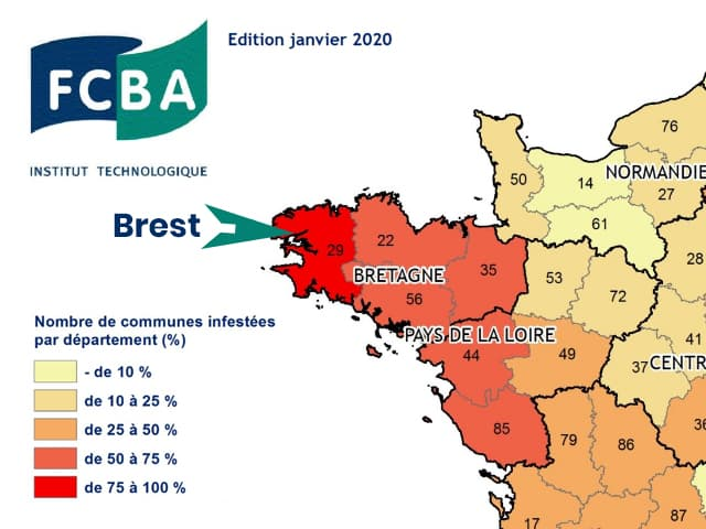 Brest se trouve dans le département de France à risques concernant la mérule